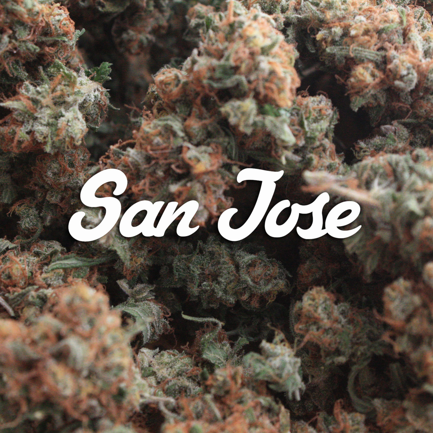 Weed Delivery in San Jose – Weed Delivery Discounts